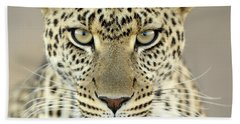 Leopard Panthera Pardus Female Hand Towel