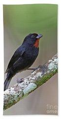 Lesser Antillean Bullfinch Bath Towel
