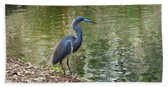 Lesser Blue Heron In Mating Plumage Bath Towel by Judy Wanamaker