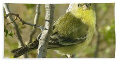 Lesser Goldfinch 1 Hand Towel