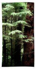 Light On Trees Hand Towel