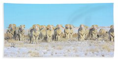 Hand Towel featuring the photograph Line Em Up Rams by Amanda Smith