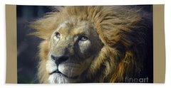 Hand Towel featuring the photograph Lion Portrait by Savannah Gibbs