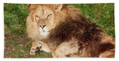 Lion Resting In The Sun Bath Towel