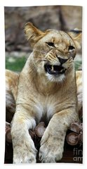 Lioness 2 Hand Towel by Inspirational Photo Creations Audrey Woods