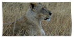 Lioness In The Grass Hand Towel