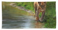 Lioness. Water's Edge Hand Towel by David Stribbling
