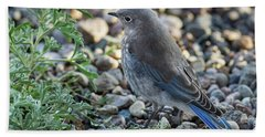 Little Fledgling Mountain Bluebird Hand Towel