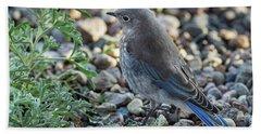 Little Fledgling Mountain Bluebird Hand Towel