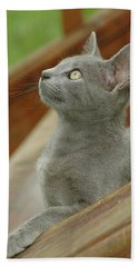 Little Gray Kitty Cat Hand Towel