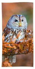 Little Owl Hand Towel