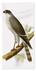 Little Red Billed Hawk Hand Towel by English School