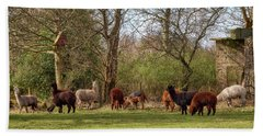 Bath Towel featuring the photograph Alpacas In Scotland by Jeremy Lavender Photography