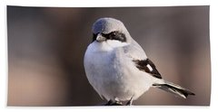 Loggerhead Shrike - Smokey Hand Towel by Travis Truelove