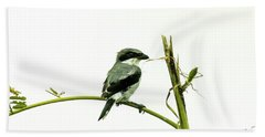 Bath Towel featuring the photograph Loggerhead Shrike And Mantis by Robert Frederick