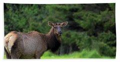 Lone Elk At Ecola State Park Bath Towel