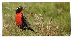 Long-tailed Meadowlark Hand Towel by Bruce J Robinson