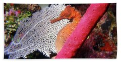 Longsnout Seahorse, Roatan, Honduras Bath Towel
