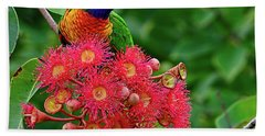 Lorikeet And Gum Nut Blossoms By Kaye Menner Bath Towel