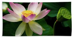 Lotus Lily In Its Final Days Hand Towel