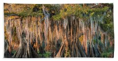 Louisiana Swamp Giant Bald Cypress Trees Two Hand Towel