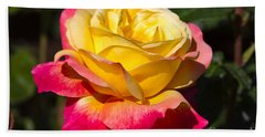 Love And Peace A Beautiful Bicolour Hybrid Tea Rose In Yellow And Red Bath Towel