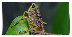 Lubber Grasshopper Hand Towel by Richard Rizzo
