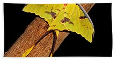 Bath Towel featuring the photograph Luna Moth by Judy Vincent