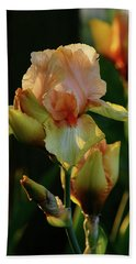 Luxurious Nature 6764 H_2 Hand Towel