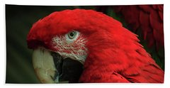 Macaw Portrait Bath Towel by Joni Eskridge