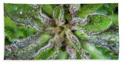 Hand Towel featuring the photograph Macro Of A Weed by Jean Haynes