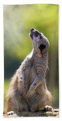 Magical Meerkat Hand Towel by Jane Rix
