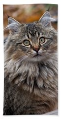 Hand Towel featuring the photograph Maine Coon Cat by Rona Black
