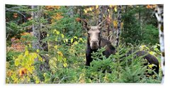 Maine Moose Bath Towel