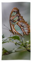 Malachite Butterfly Profile Hand Towel by Patti Deters