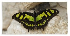 Bath Towel featuring the photograph Malachite Butterfly - Siproeta Stelenes by Paul Gulliver