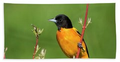 Male Baltimore Oriole Posing Hand Towel