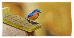 Male Blue Bird Guarding House Hand Towel