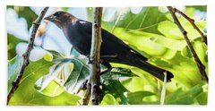 Male Brown-headed Cowbird Hand Towel