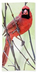 Male Cardinal Perched On Budding Stem Bath Towel