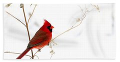 Male Cardinal Posing In The Snow Hand Towel