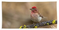 Male Cassins Finch Bath Towel