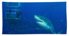 Male Great White Shark And Divers Bath Towel