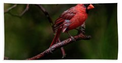 Male Northern Cardinal Hand Towel