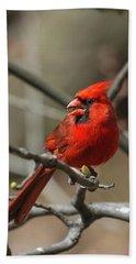 Male Northern Cardinal In Spring Bath Towel