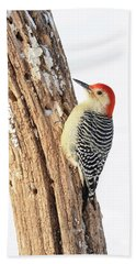 Hand Towel featuring the photograph Male Red-bellied Woodpecker by Paul Miller