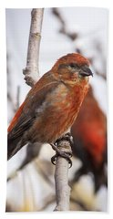 Male Red Crossbills Hand Towel by Robert Potts