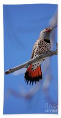 Male Red Shafted Northern Flicker Bath Towel