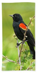 Male Red-winged Blackbird Bath Towel