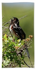 Male Spotted Towhee Hand Towel